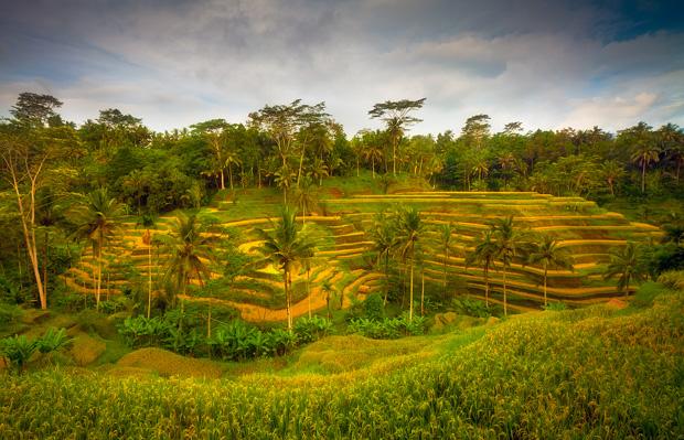 Bali Indonesia - Rice Terrace