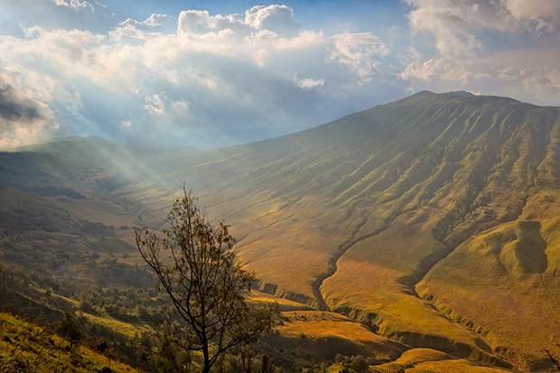 Bromo Savannah - Photographing Mount Bromo
