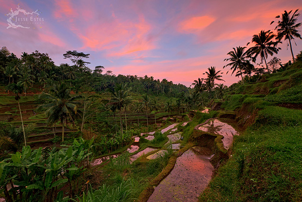 Tegallalang Rice Terrace - Photographing Bali Indonesia
