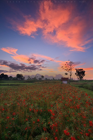 Flower field - Photographing Bali Indonesia