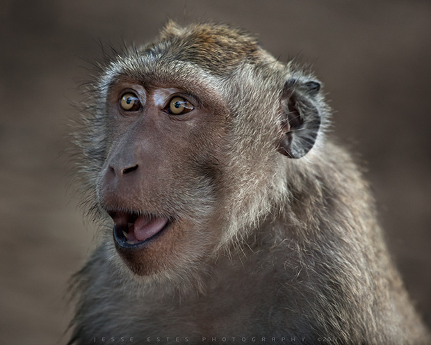 Monkey - Uluwatu, Photographing Bali Indonesia