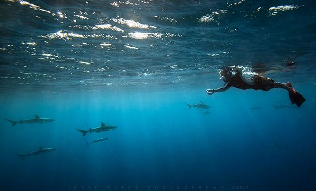 Tahiti & The French Polynesia, Underwater Photography